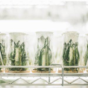 Консультация по микробиоте кишечника